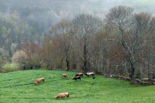 La Xunta estudia prorrogar las ayudas agroambientales en los próximos años