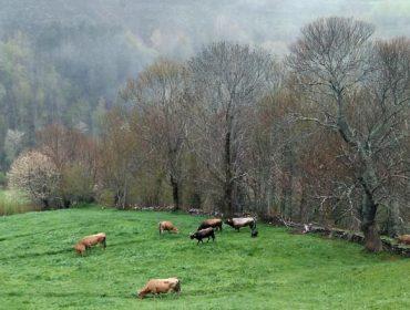 A Xunta estuda prorrogar as axudas agroambientais nos próximos anos