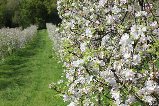 Recomendaciones para el cuidado de las frutales