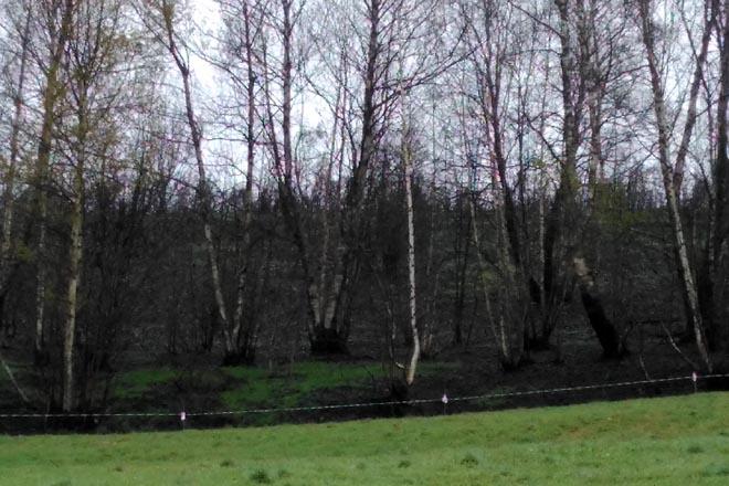 O Parlamento galego regulará excepcións para pastorear zonas queimadas