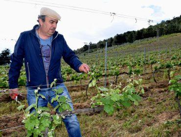 """""""Valdeorras tiene una oportunidad histórica para sus vinos si se apuesta por la zonificación"""""""
