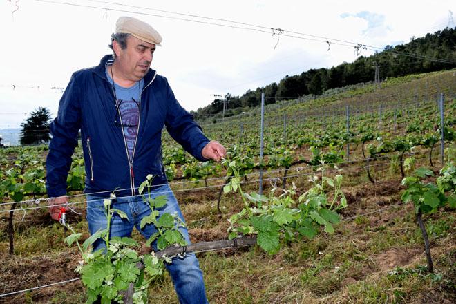 """""""Valdeorras ten unha oportunidade histórica para os seus viños se se aposta pola zonificación"""""""