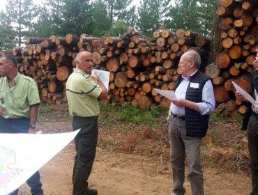 Xestión do monte na Provenza francesa, problemas comúns con Galicia