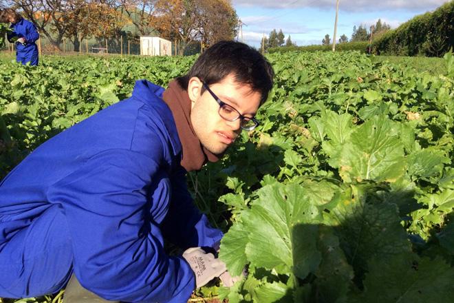 Persoas con Síndrome de Down participando nun proxecto de inserción no sector da horta