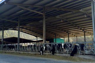 Estebano SC: El secreto de una ganadería que logra grandes producciones vitalicias y calidades altas