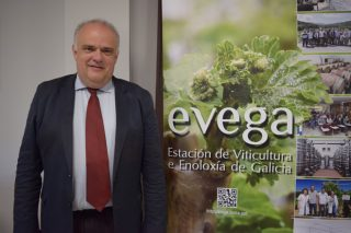 """""""O viño español pode quedar fóra do mercado se non aposta por variedades de vide resistentes a mildiu e oídio"""""""