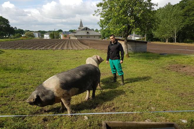 """""""Hai moita marxe para mellorar a xenética do Porco Celta"""""""
