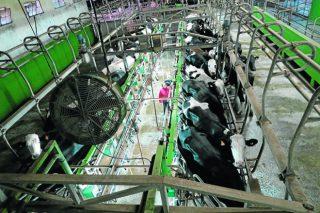 As entregas de leite continúan baixando en España, aínda que Galicia segue a medrar