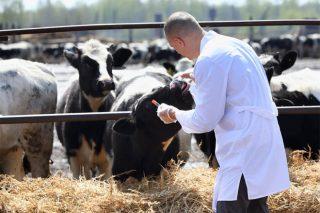 Prevalencia de la Enfermedad Respiratoria Bovina en la producción de leche y carne