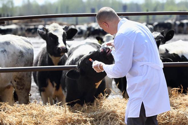 Prevalencia da Enfermidade Respiratoria Bovina na produción de leite e carne