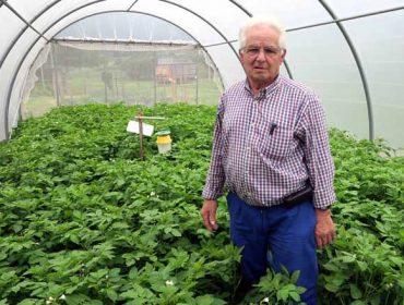 Habaneras, las patatas de A Mariña que han dado de comer a generaciones