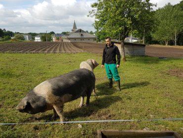 """""""Prevemos aumentar este ano un 15% a produción de carne de Porco Celta 100% Raza Autóctona"""""""