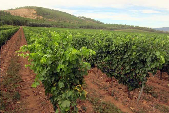 Xornada en Vilaboa sobre os beneficios do compost na viña