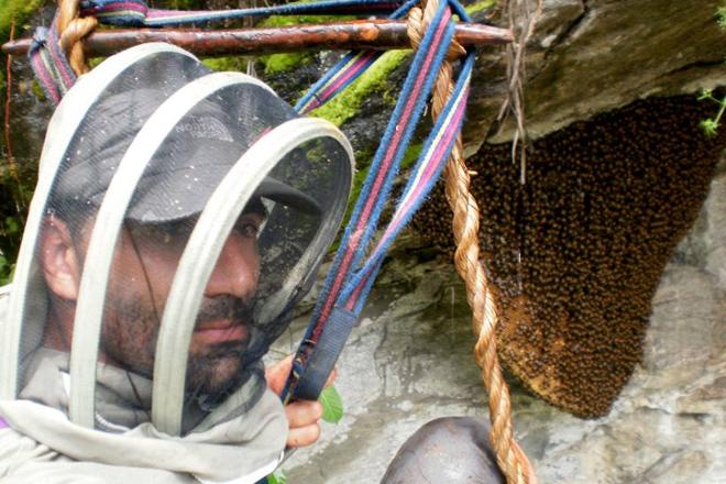 """""""A abella ibérica é a máis adaptada ao noso medio, non ten sentido importar raíñas doutros países"""""""