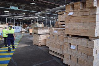 As cortas de piñeiro fréanse tras parar Finsa, pero mantense o mercado de eucalipto