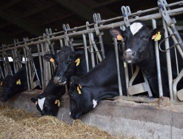 Xornada sobre mellora da eficiencia nas granxas de vacún de leite