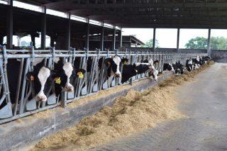 Baja la producción de leche en noviembre y ligero repunte de los precios