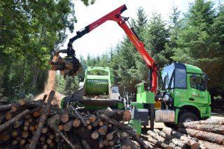 La Xunta prevé que con el nuevo Plan Forestal Galicia duplicará la producción de madera