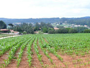 Las 10 reclamaciones de Galicia ante la reforma de las ayudas de la PAC