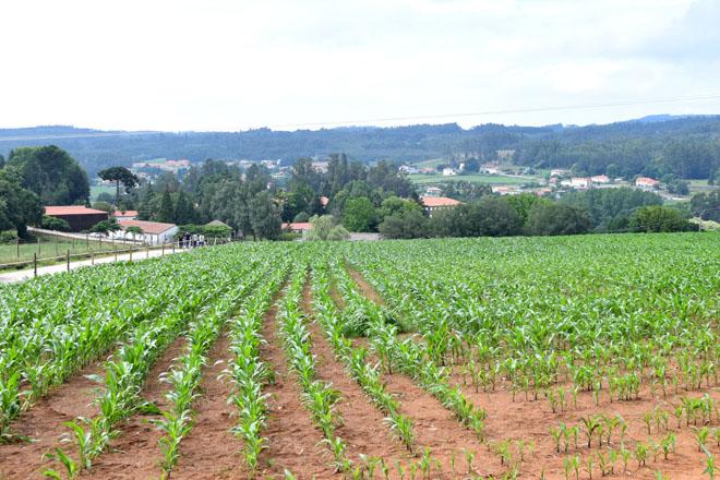Estratexias Kenogard de control de malas herbas e pragas de solo no millo
