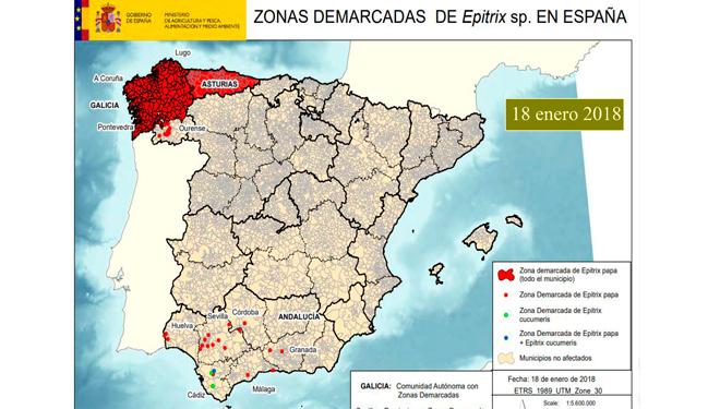 A zona demarcada para controlar a pulguiña da pataca exténdese xa a case toda Galicia