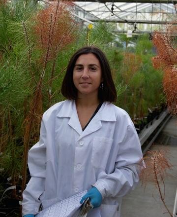 ¿A que especies de piñeiro lles afecta máis o nematodo?