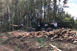 A Delegación do Goberno aclara que aserradoiros, rematantes e viveiros forestais poden manter a actividade