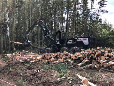 A Xunta actualizará en tempo real os datos das solicitudes de cortas de madeira na comunidade