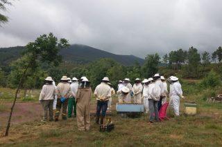 Curso de apicultura en Ribadavia