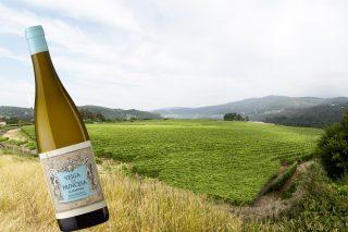 Os segredos de Veiga da Princesa, elixido mellor viño branco de Galicia 2018