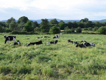 Critican atrasos de 6 meses no pago de 90 millóns de euros en axudas ó sector agrario