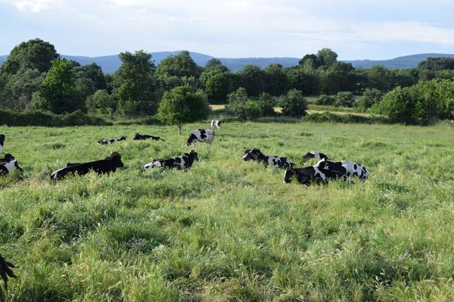 Critican retrasos de 6 meses en el pago de 90 millones de euros en ayudas al sector agrario