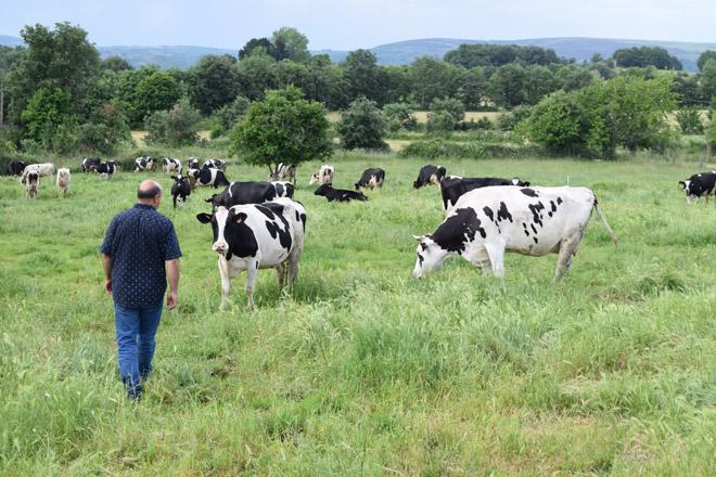 ¿En que países da Unión Europea gañan máis diñeiro os produtores de leite?