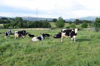 Tendencias nos pagos do leite en Europa: primas por sostibilidade, pastoreo e pensos sen transxénicos