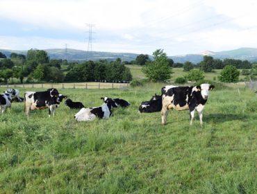 Tendencias en los pagos de la leche en Europa: primas por sostenibilidad, pastoreo y piensos sin transgénicos