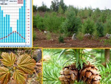 """Programa de la jornada técnica sobre """"Especies arbóreas alternativas frente al cambio climático"""""""