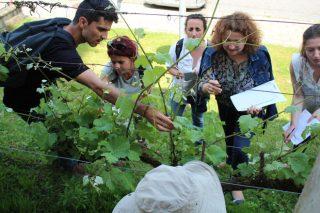 Aberta a preinscrición nos cursos en xestión de enfermidades da vide do proxecto Erasmus+Pathogen no Campus Terra da USC
