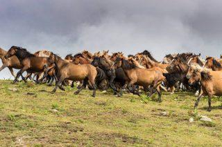 Santo Tomé, no Valadouro, xuntará este domingo un cento de cabalos na súa rapa