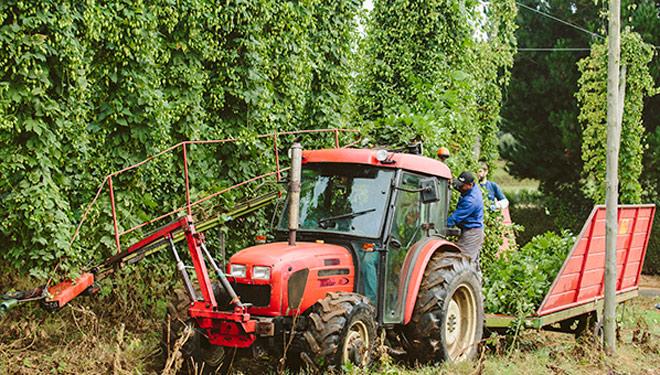 Convocadas las ayudas para impulsar las plantaciones de lúpulo en Galicia