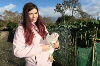 Finca Azureira, una explotación avícola ecológica en pastoreo