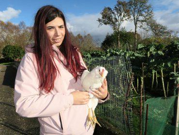 Finca Azureira, unha explotación avícola ecolóxica en pastoreo