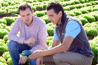 ICL lanza o seu novo catálogo de fertilizantes Agromaster para un abonado preciso