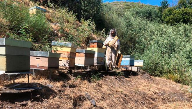 Cómo los apicultores del Courel evitan las 'visitas' de los osos a las colmenas