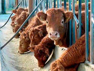 Publicada a orde de Medio Rural que permite adiantar 18,5 millóns a gandeiros e agricultores