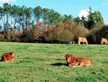 Cómo mejorar la rentabilidad en el manejo de las vacas de carne