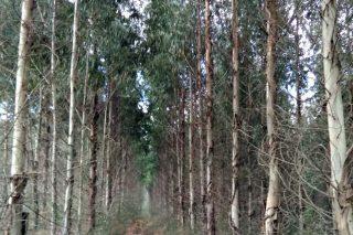 O Plan Forestal, visto para sentencia