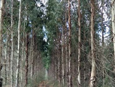 El Plan Forestal, visto para sentencia