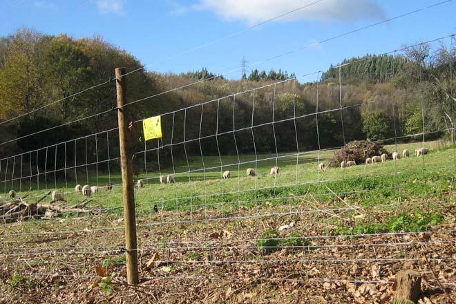 «Medio Ambiente deja a los ganaderos sin opciones frente al lobo»