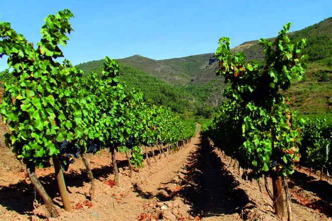 Proxecto de investigación para garantir a orixe dos viños de Valdeorras