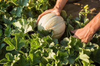 Como ten que cotizar a agricultura a tempo parcial?